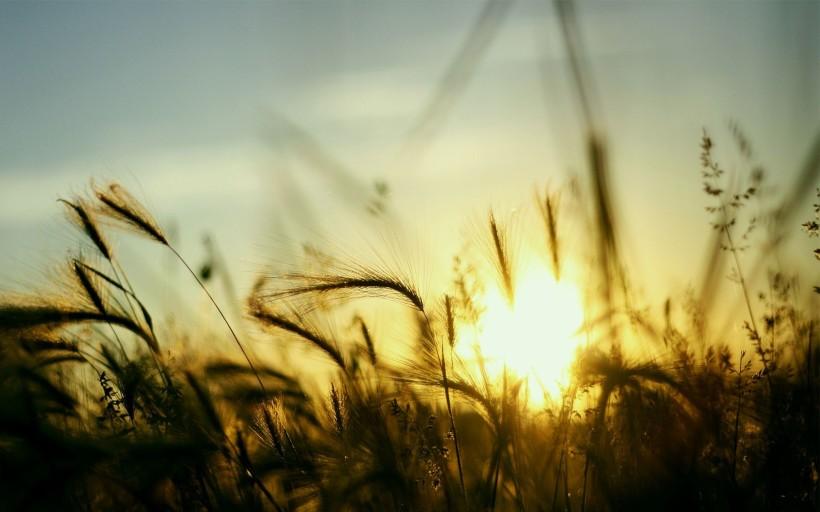 sunshine-223544